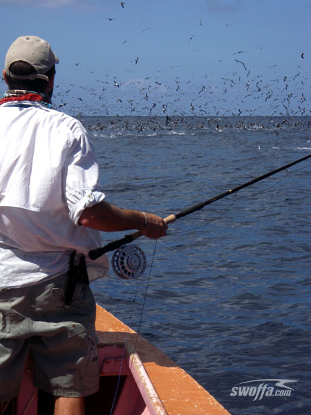 Swoffa saltwater fly fishing australia fly fishing for Saltwater fishing leader